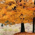 Impresiones de otoño piano meditación